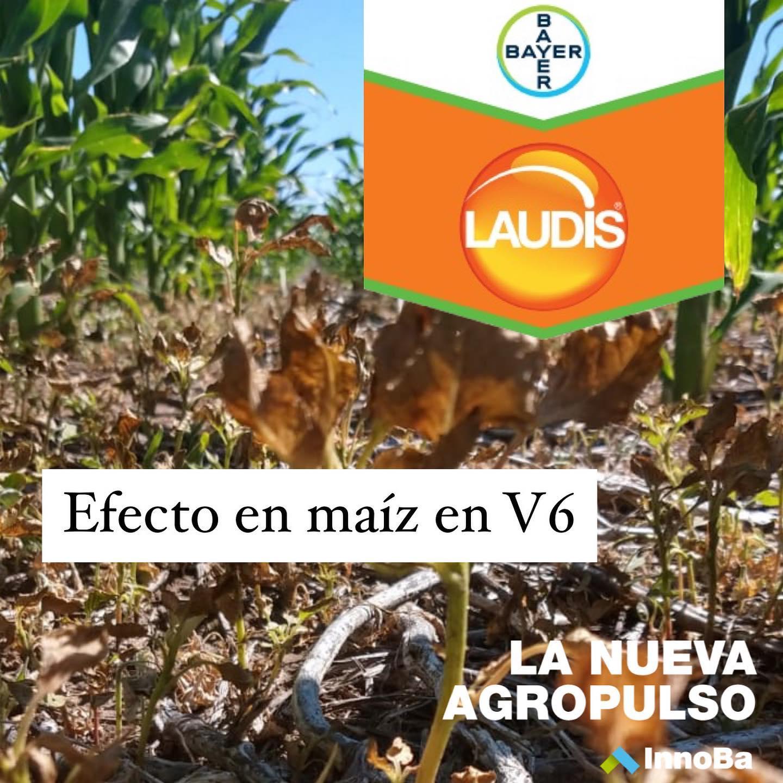 Laudis: Efecto en maíz V6