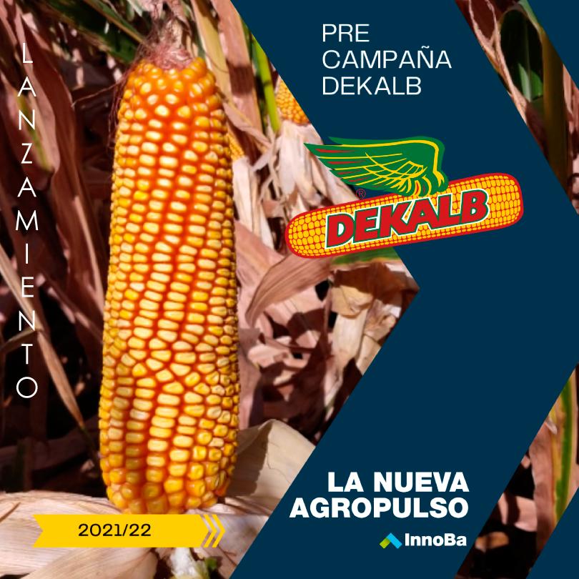 Pre-campaña de maíz DEKALB 2021/22