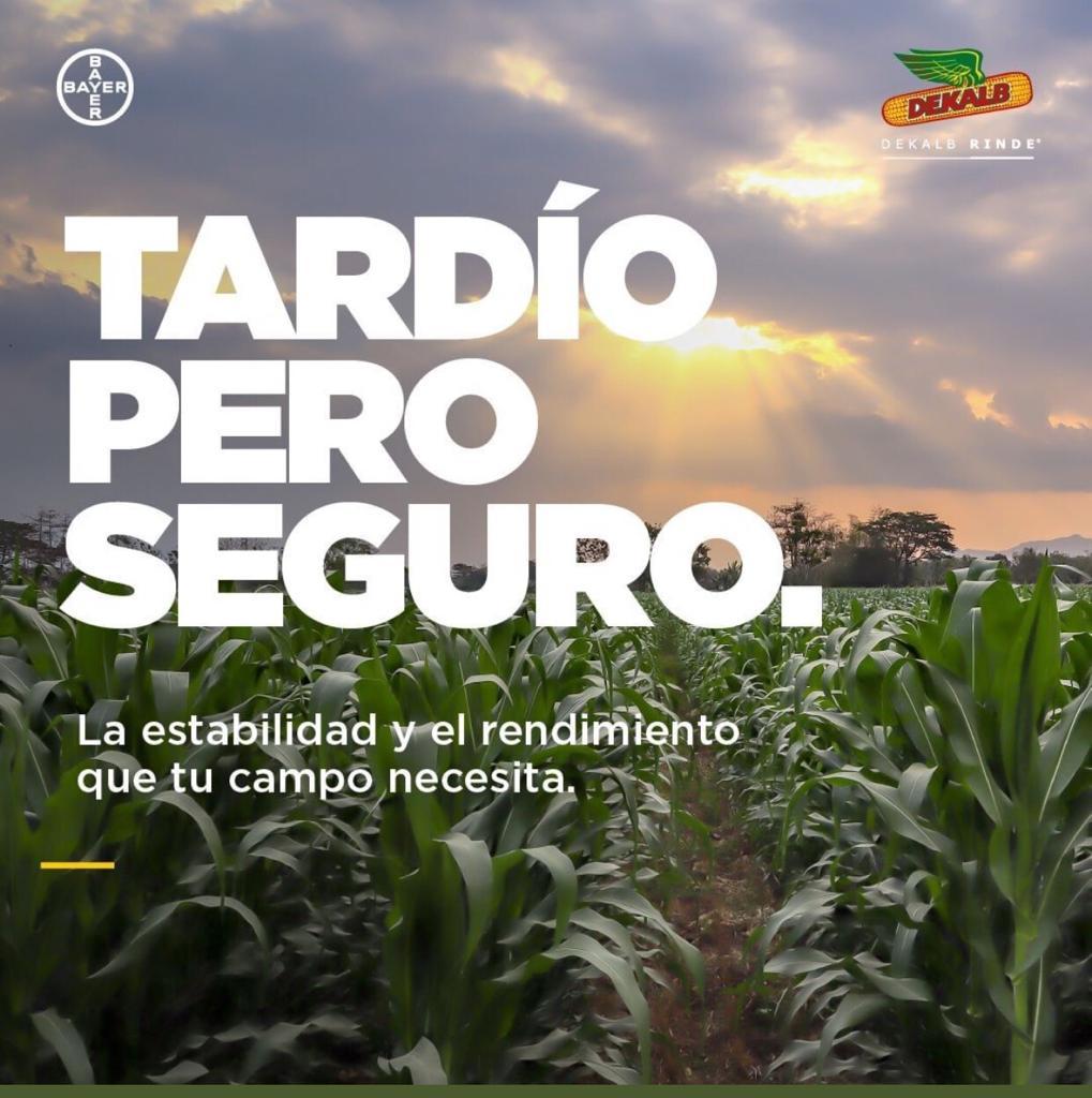 DEKALB, con la mejor propuesta integral para hacer maíz tardío en esta campaña