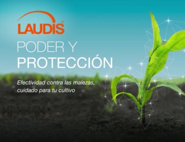 ¡Descubrí el Poder y Protección de Laudis!