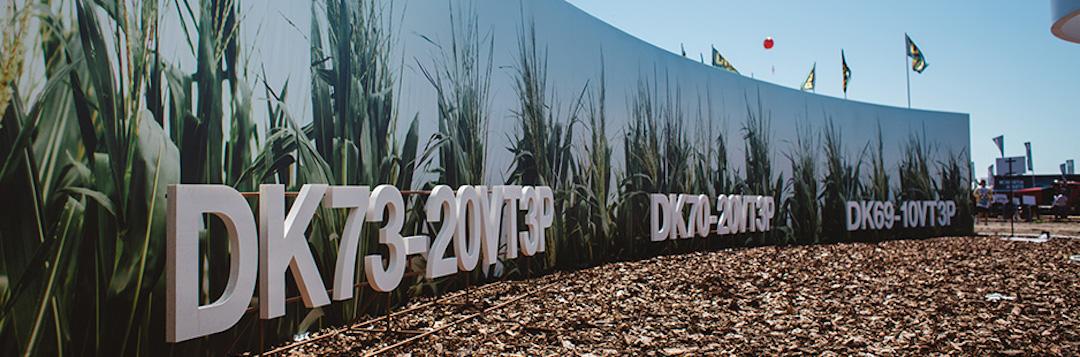 DK73-20, DK70-20 y DK69-10: los tres nuevos híbridos Dekalb de alta adaptación y estabilidad